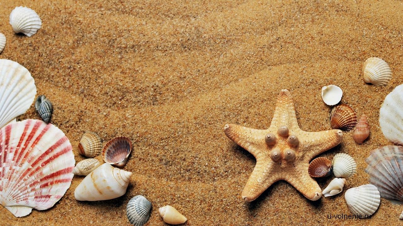морской берег с ракушками